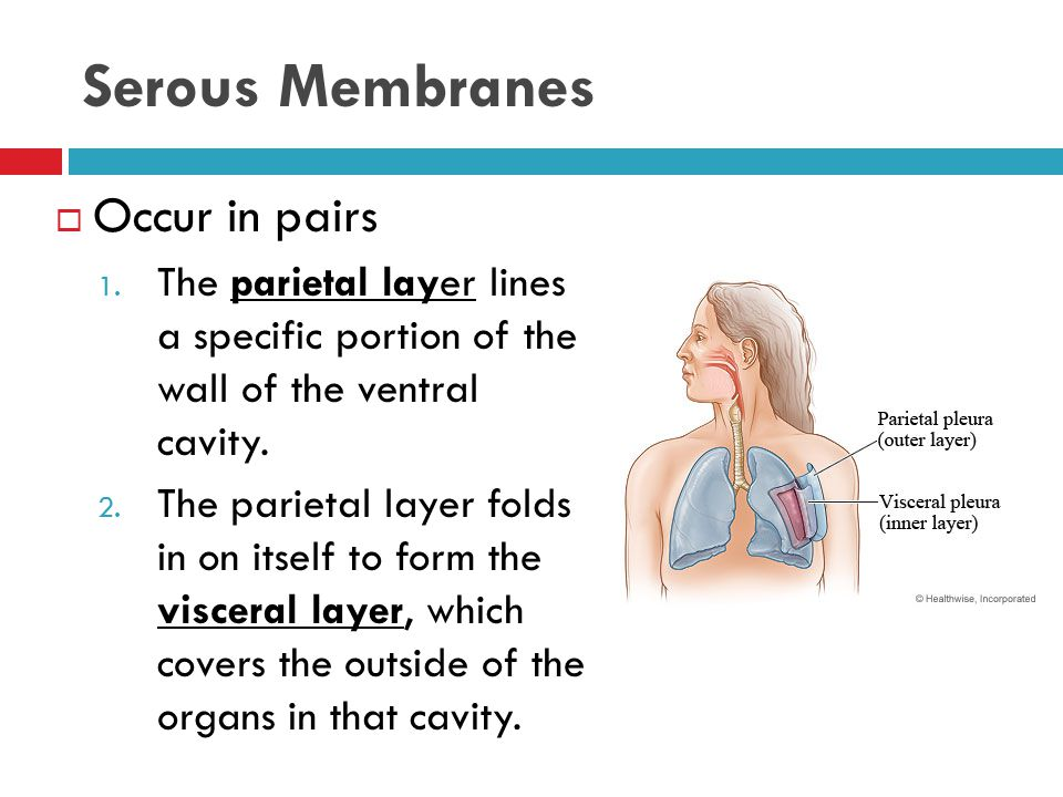 The Main Layers of Skin 1.Epidermis  The outer layer of the skin.
