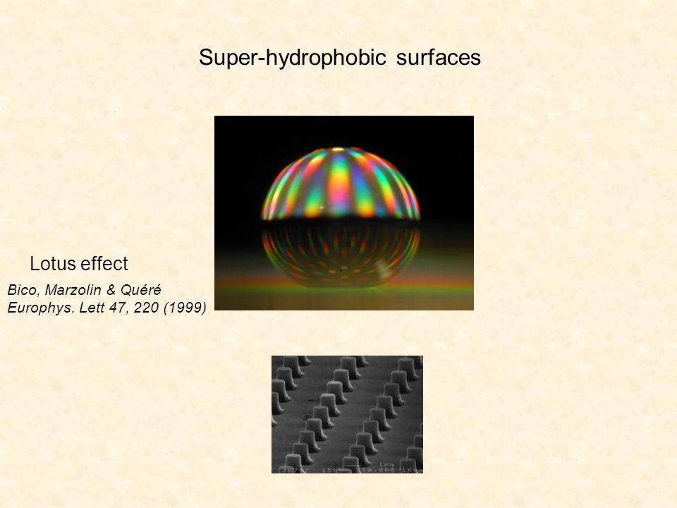 Bico, Marzolin & Quéré Europhys. Lett 47, 220 (1999) Lotus effect Super-hydrophobic surfaces