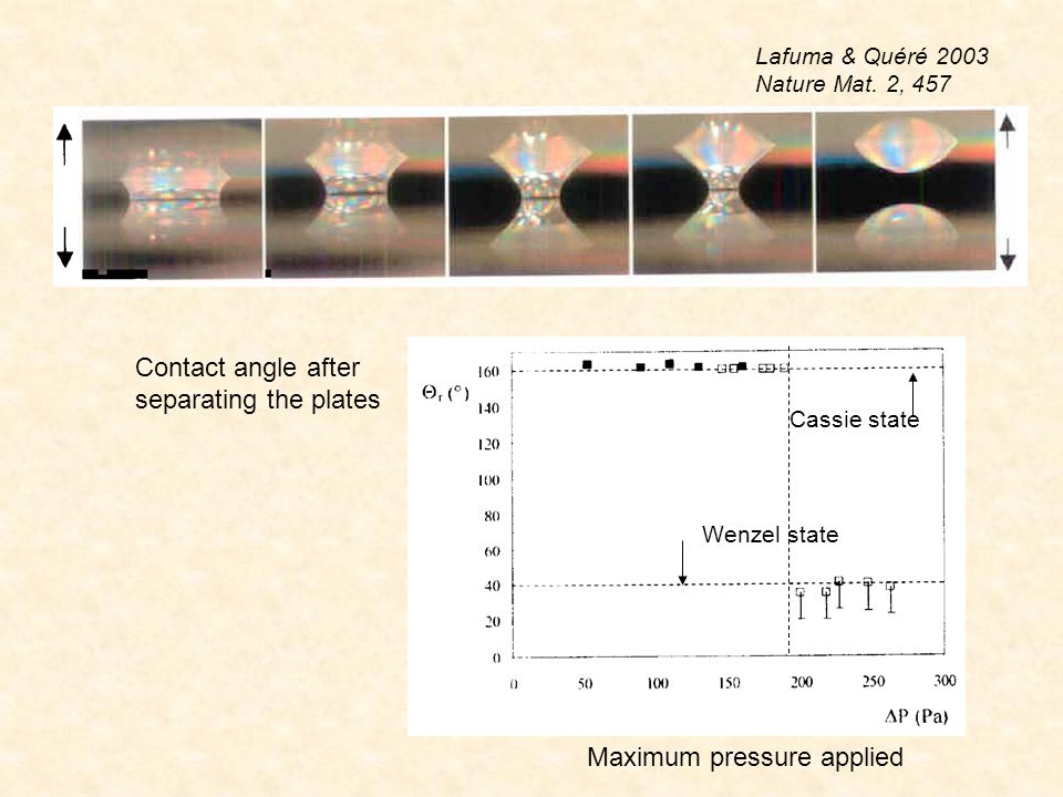 thiol in gaz phase thiol in liquid phase Bundling due to capillary adhesion before after