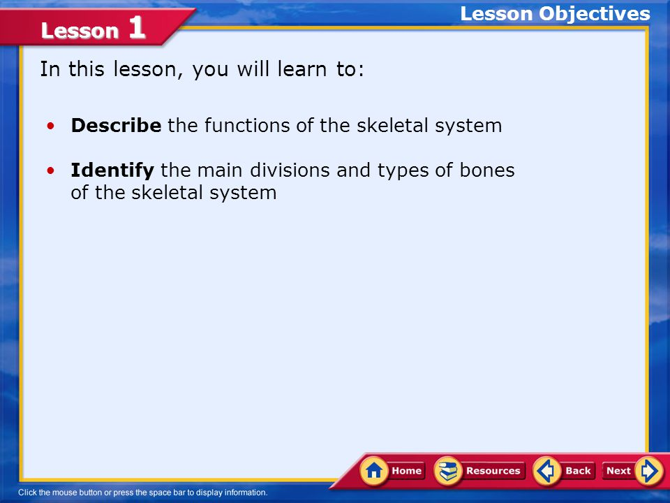 Lesson 1 The Axial and Appendicular Skeletons Your skeletal system consists of 206 bones that can be classified in two main groups: 1.Axial skeletonAxial skeleton 2.Appendicular skeletonAppendicular skeleton The axial skeleton consists of the 80 bones of the skull, spine, ribs, vertebrae, and sternum, or breastbone.