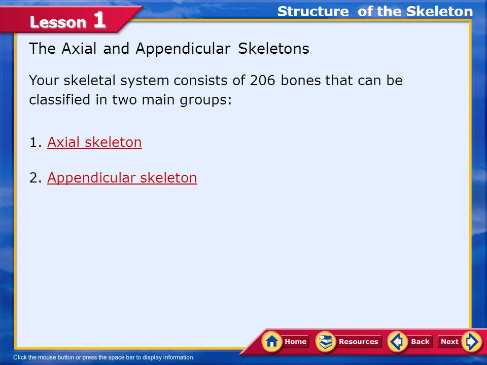 Lesson 1 The Axial and Appendicular Skeletons Your skeletal system consists of 206 bones that can be classified in two main groups: 1.Axial skeletonAxial skeleton 2.Appendicular skeletonAppendicular skeleton Structure of the Skeleton
