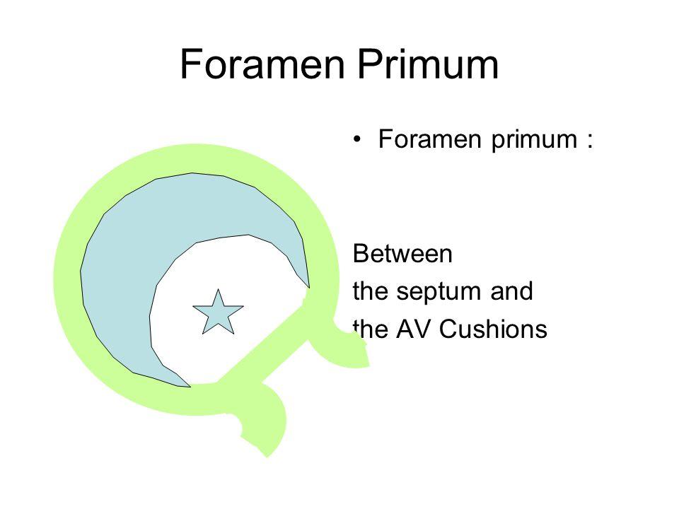 Foramen Primum Foramen primum : Between the septum and the AV Cushions