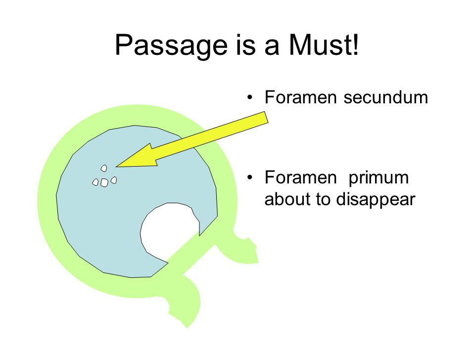 Passage is a Must! Foramen secundum Foramen primum about to disappear