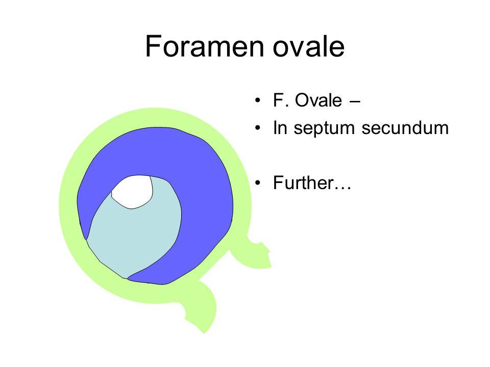 Foramen ovale F. Ovale – In septum secundum Further…