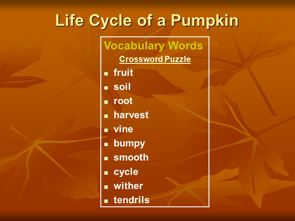 Life Cycle of a Pumpkin Vocabulary Words Crossword Puzzle fruit soil root harvest vine bumpy smooth cycle wither tendrils