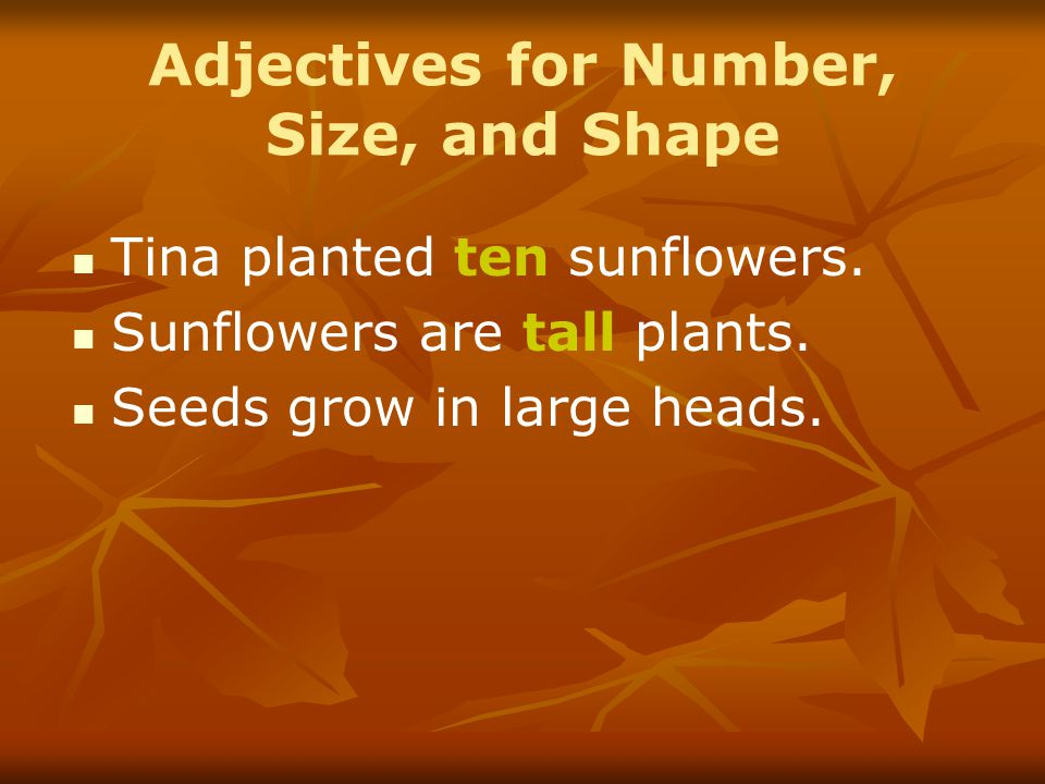 Adjectives for Number, Size, and Shape Tina planted ten sunflowers. Sunflowers are tall plants. Seeds grow in large heads.
