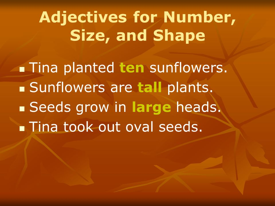 Adjectives for Number, Size, and Shape Tina planted ten sunflowers. Sunflowers are tall plants. Seeds grow in large heads. Tina took out oval seeds.