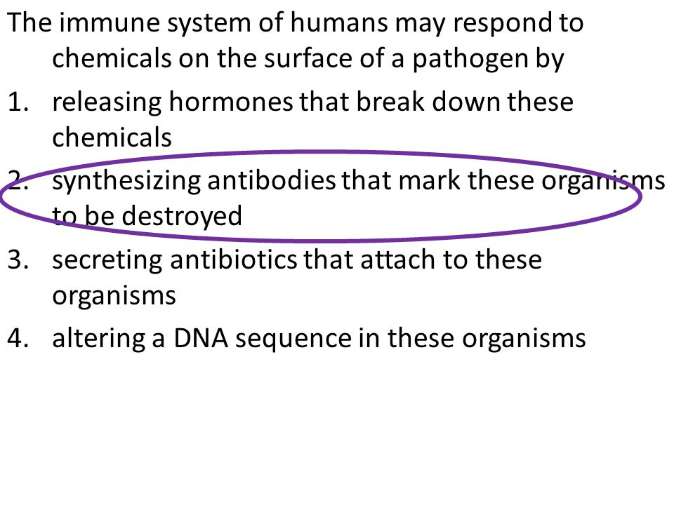 The immune system of humans may respond to chemicals on the surface of a pathogen by 1.releasing hormones that break down these chemicals 2.synthesizing antibodies that mark these organisms to be destroyed 3.secreting antibiotics that attach to these organisms 4.altering a DNA sequence in these organisms