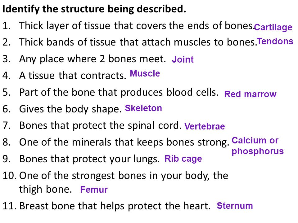 Identify the structure being described. 1.Thick layer of tissue that covers the ends of bones.