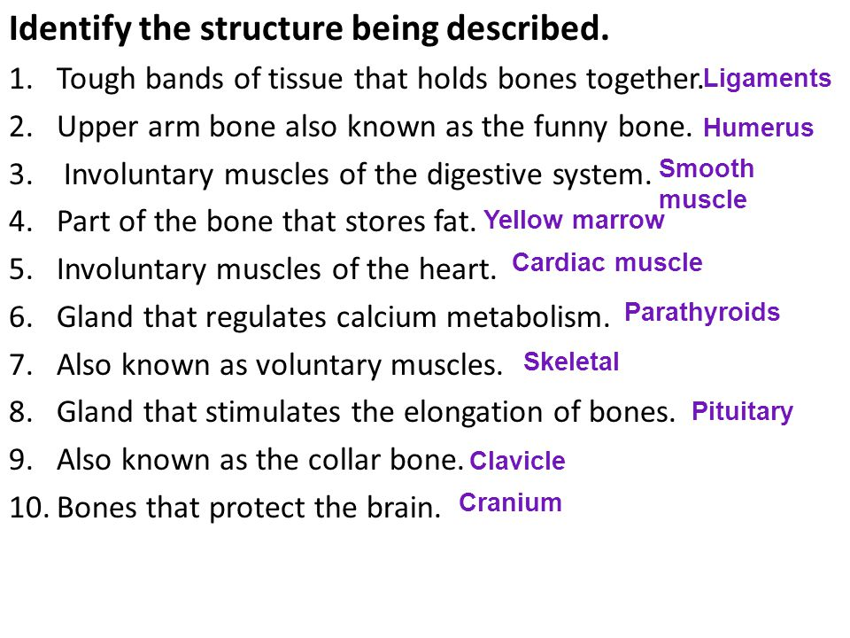 Identify the structure being described. 1.Tough bands of tissue that holds bones together.
