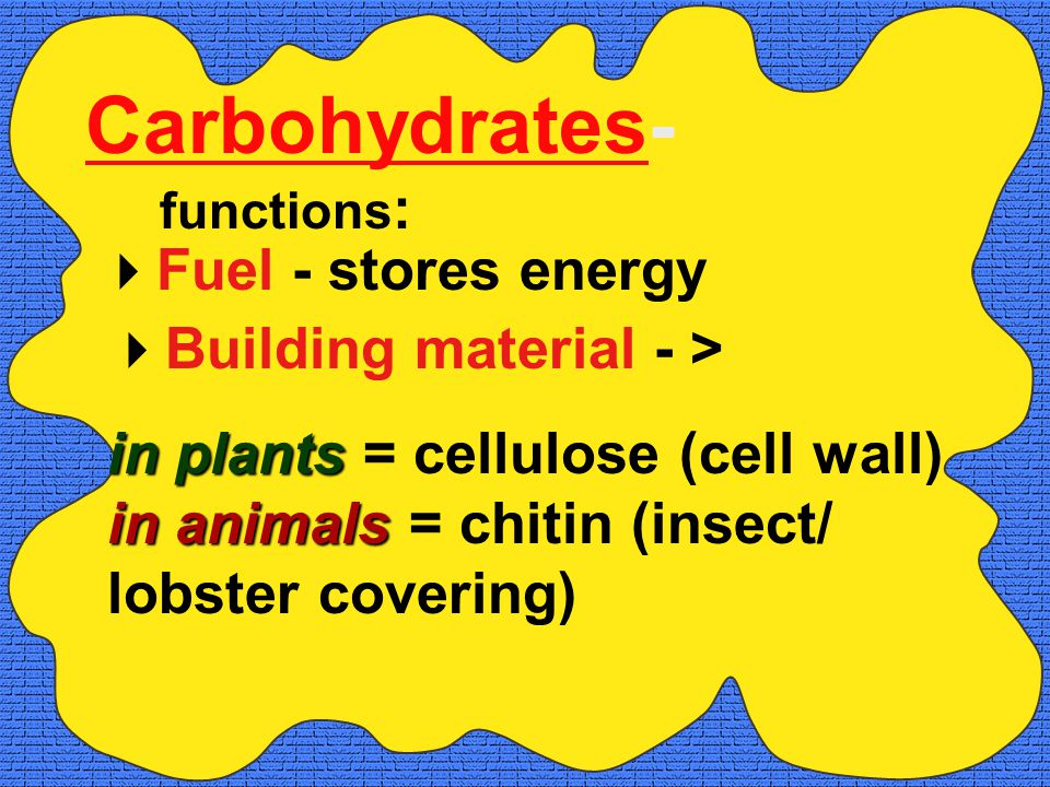 Carbohydrates-  Fuel - stores energy functions :  Building material - > in plants in animals in plants = cellulose (cell wall) in animals = chitin (insect/ lobster covering)