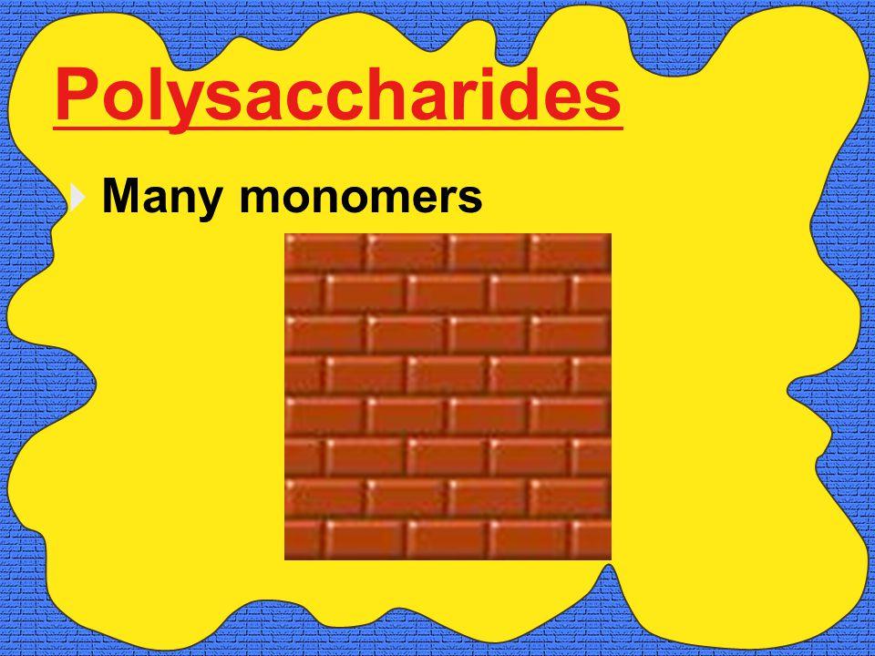 Polysaccharides  Many monomers