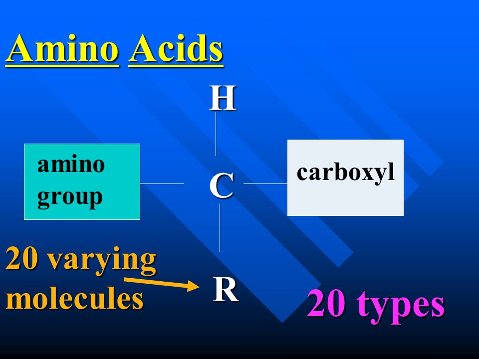 Amino Acids C R H carboxyl amino group 20 types 20 types 20 varying molecules