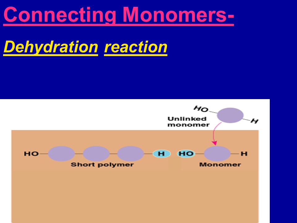 Connecting Monomers- Dehydration reaction Hydrolysis-  Breaking apart polymer  Adding water molecule