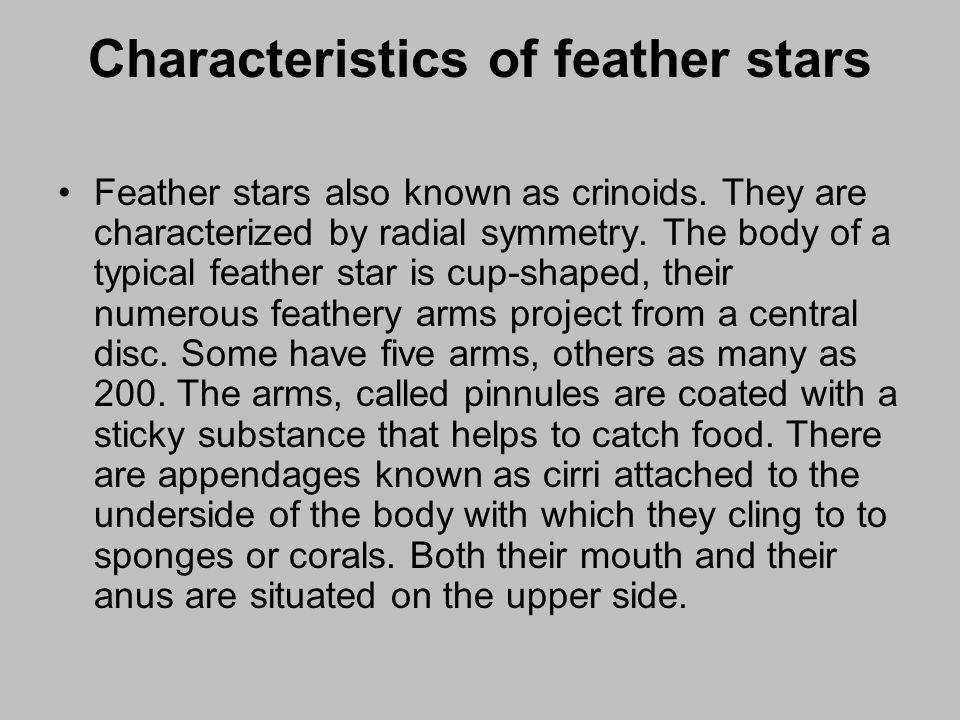 Characteristics of feather stars Feather stars also known as crinoids. They are characterized by radial symmetry. The body of a typical feather star i
