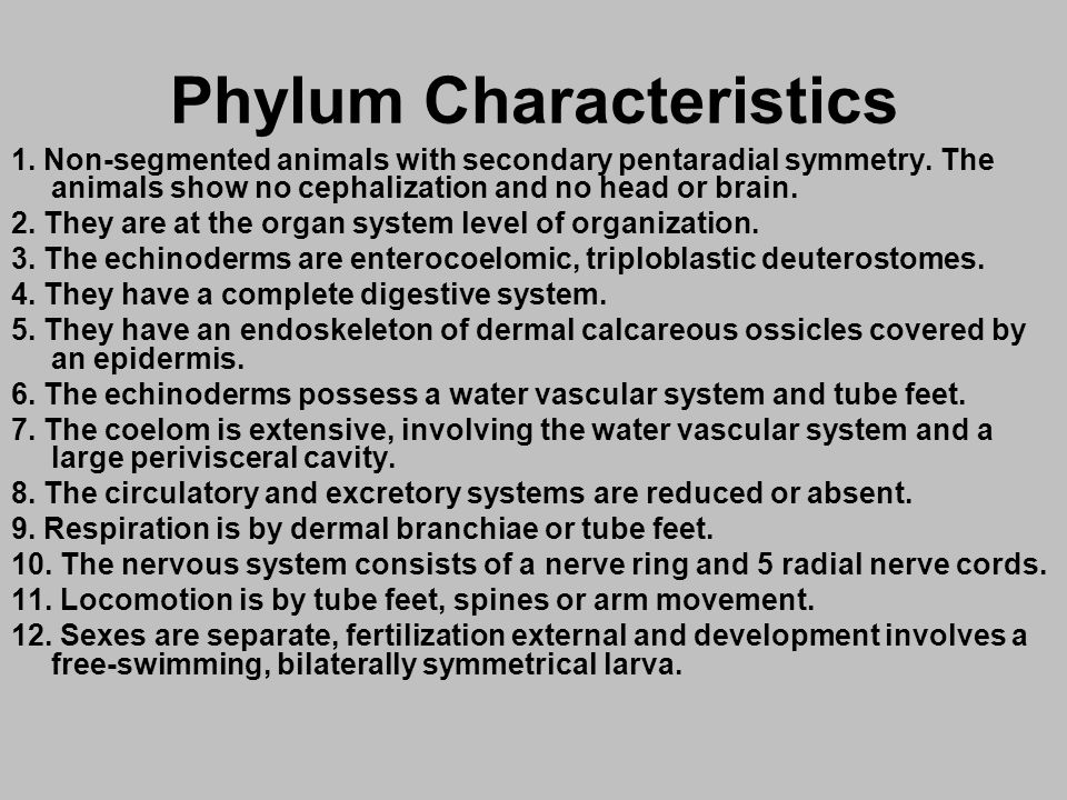 Phylum Characteristics 1. Non-segmented animals with secondary pentaradial symmetry. The animals show no cephalization and no head or brain. 2. They a