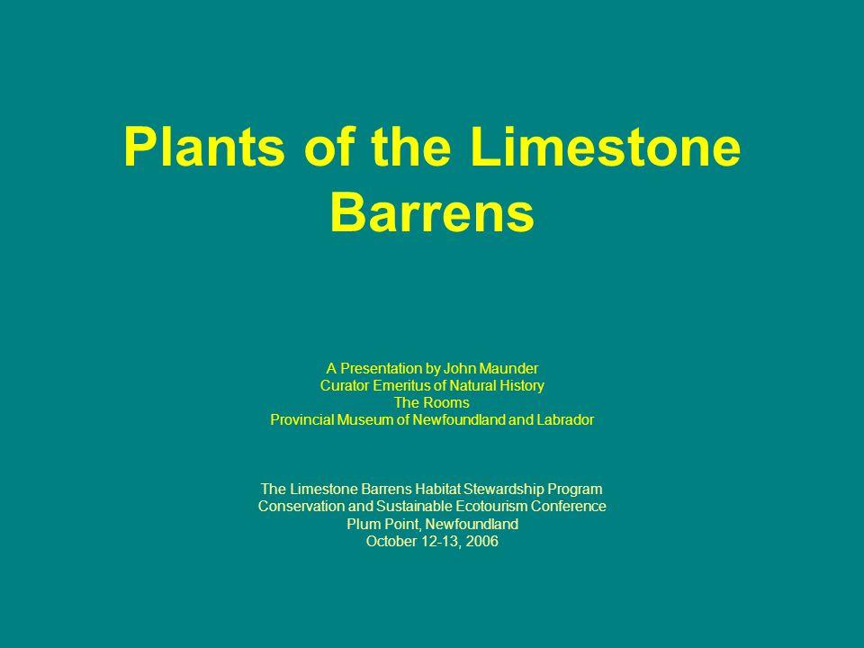 Plants? … What plants? … Cape Norman