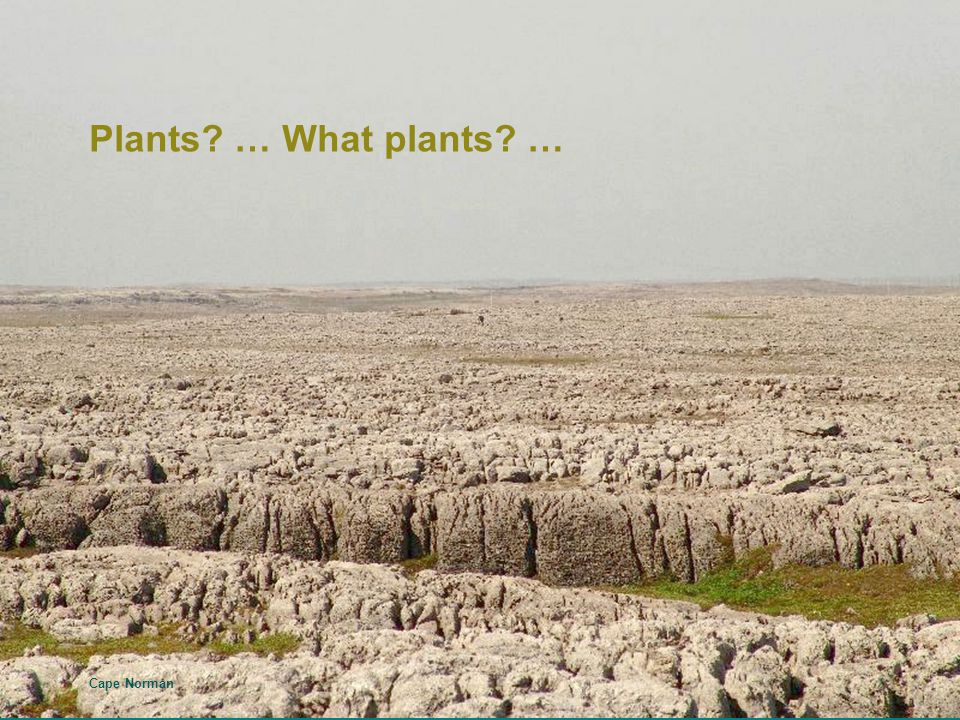 Plants? … What plants? … Cape Norman