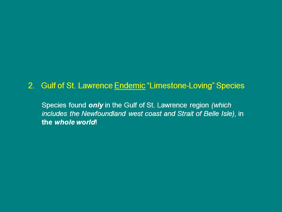 2. Gulf of St. Lawrence Endemic Limestone-Loving Species Species found only in the Gulf of St.