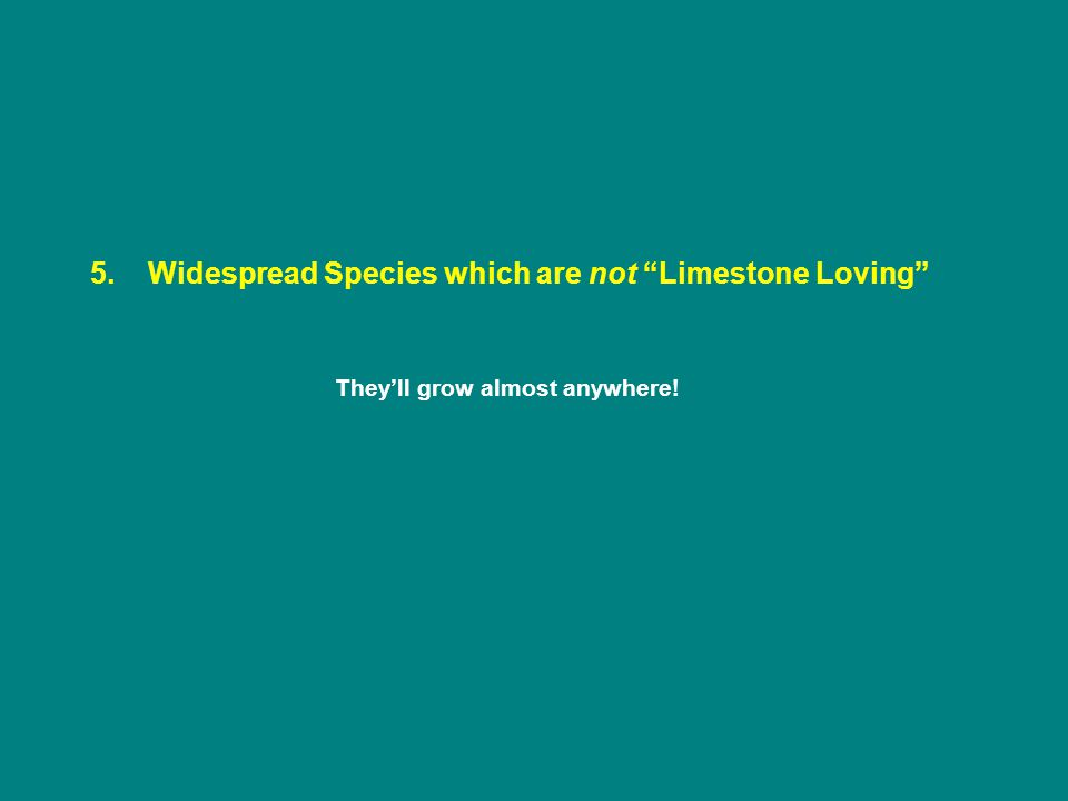 5. Widespread Species which are not Limestone Loving They'll grow almost anywhere!