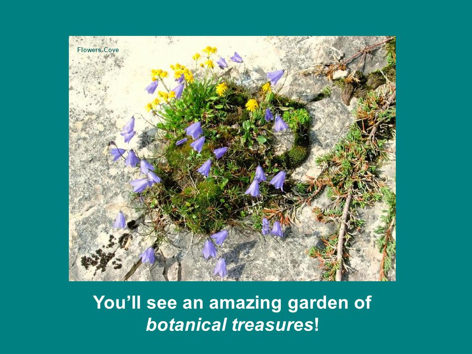 You'll see an amazing garden of botanical treasures! Flowers Cove