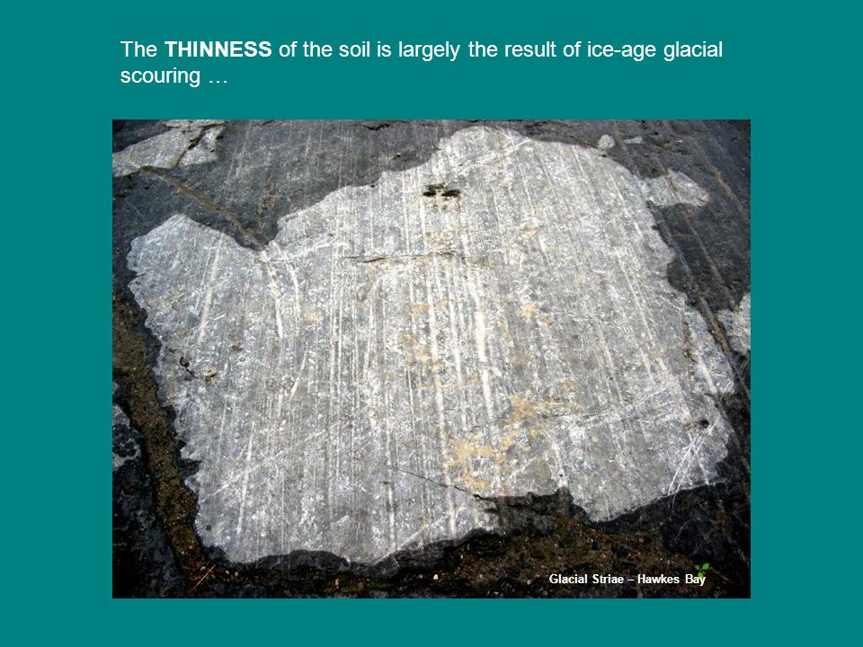 The THINNESS of the soil is largely the result of ice-age glacial scouring … Glacial Striae – Hawkes Bay