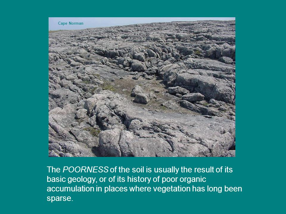 The POORNESS of the soil is usually the result of its basic geology, or of its history of poor organic accumulation in places where vegetation has long been sparse.