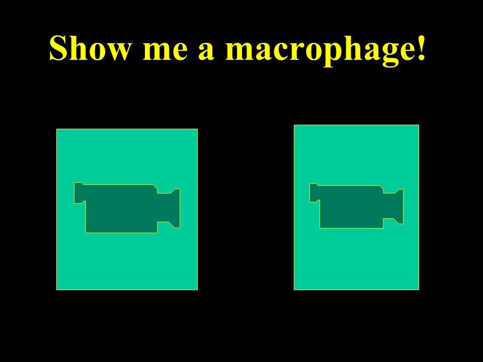 Show me a macrophage!