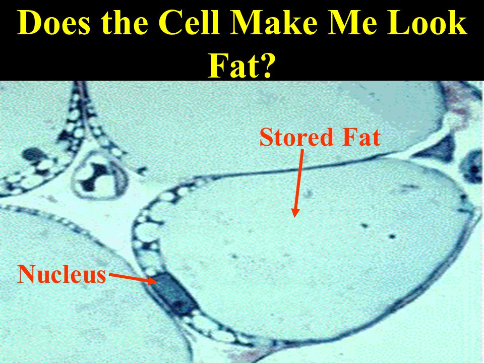 Does the Cell Make Me Look Fat Nucleus Stored Fat