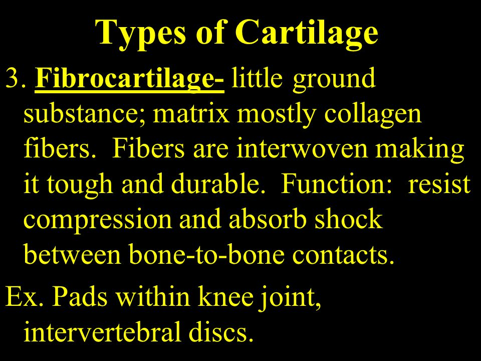 Types of Cartilage 3. Fibrocartilage- little ground substance; matrix mostly collagen fibers.