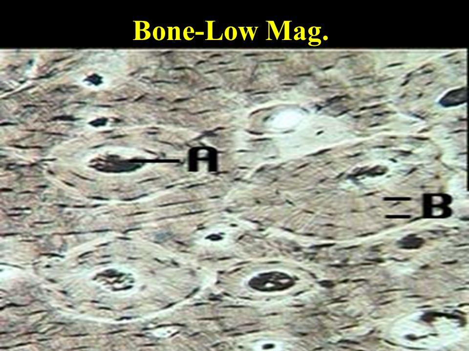 Bone-Low Mag.