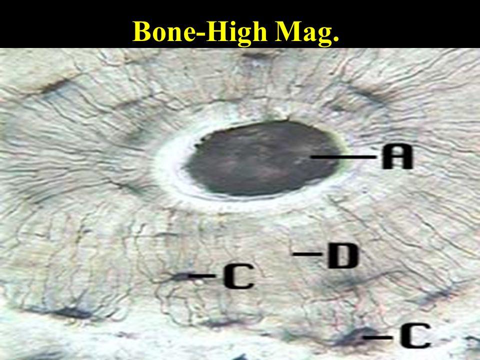 Bone-High Mag.