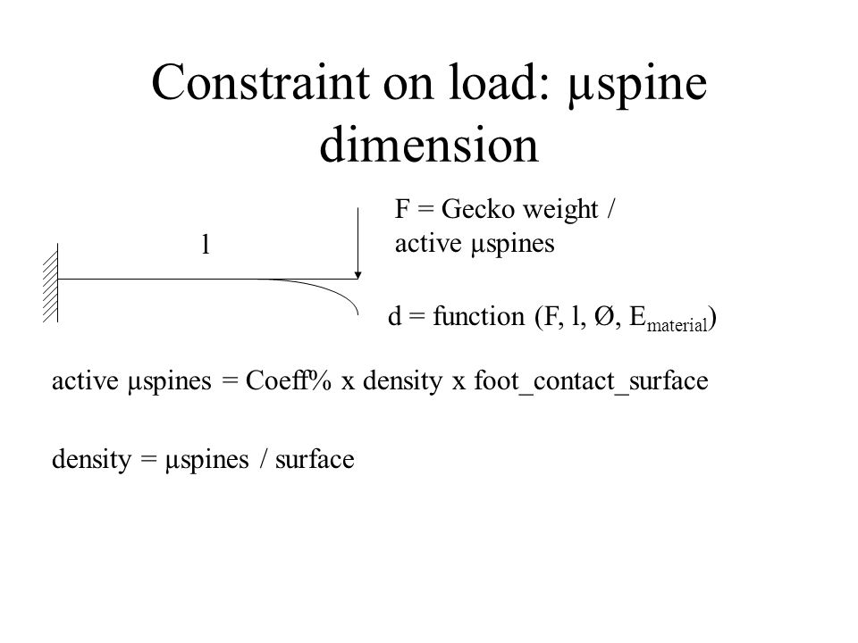 Constraint on load: µspine dimension F = Gecko weight / active µspines l active µspines = Coeff% x density x foot_contact_surface d = function (F, l,