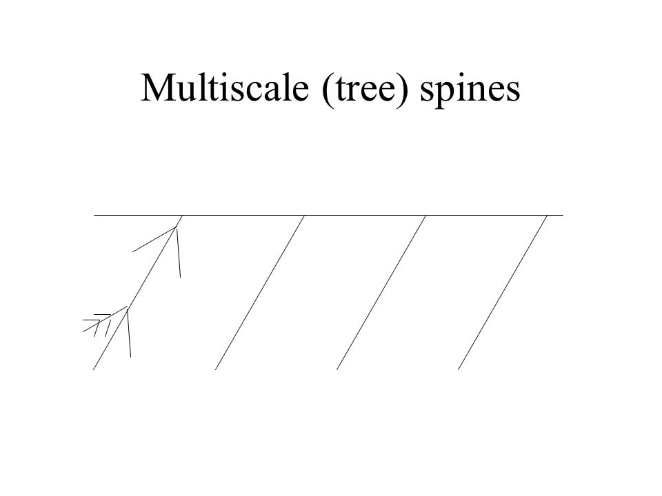 Multiscale (tree) spines