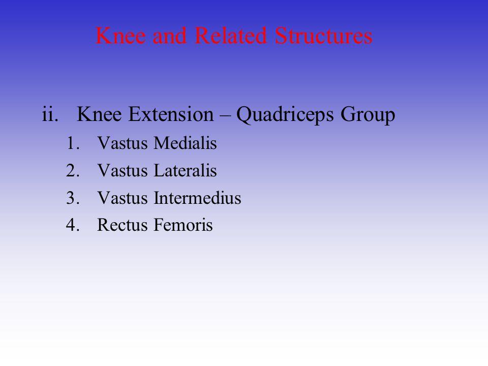 Knee and Related Structures ii.Knee Extension – Quadriceps Group 1.Vastus Medialis 2.Vastus Lateralis 3.Vastus Intermedius 4.Rectus Femoris