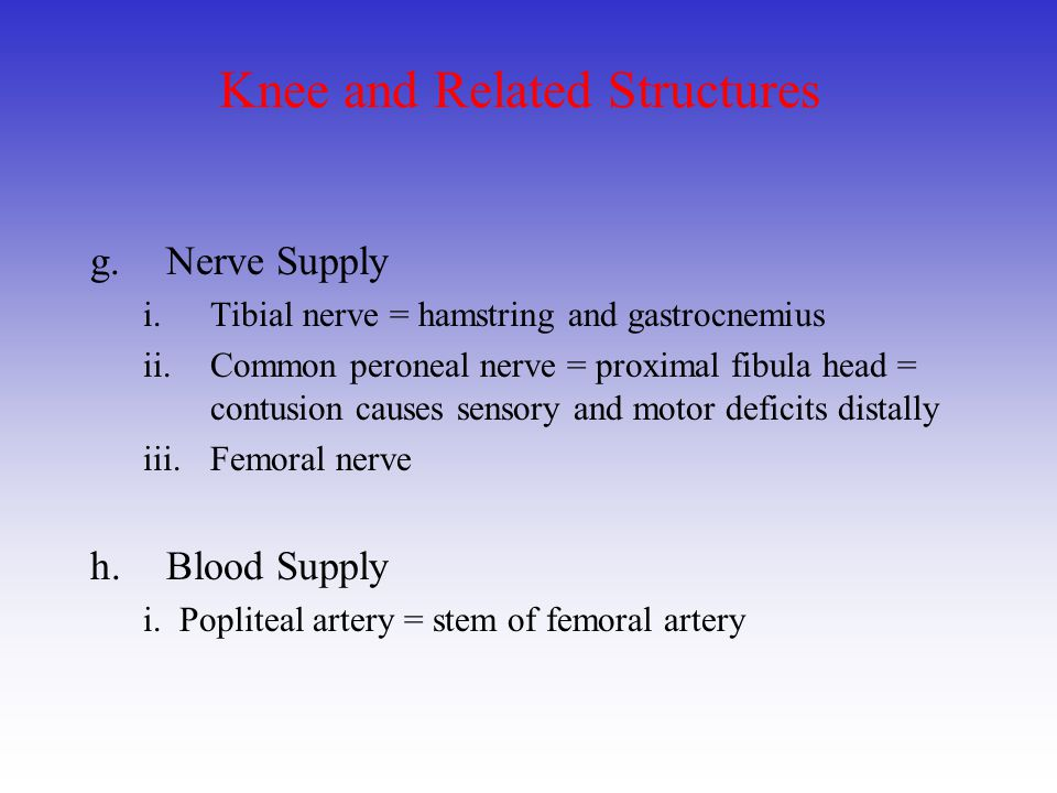 Knee and Related Structures g.Nerve Supply i.Tibial nerve = hamstring and gastrocnemius ii.Common peroneal nerve = proximal fibula head = contusion ca