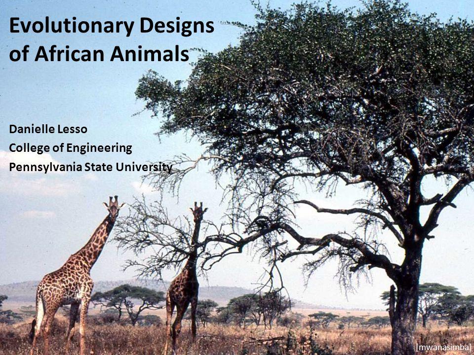 Evolutionary Designs of African Animals Danielle Lesso College of Engineering Pennsylvania State University [mwanasimba]