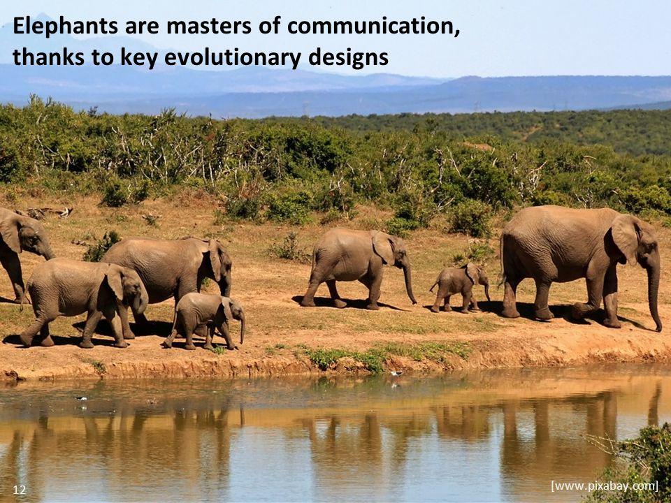 Elephants are masters of communication, thanks to key evolutionary designs [www.pixabay.com] 12