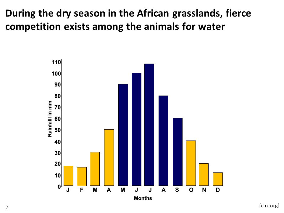 During the dry season in the African grasslands, fierce competition exists among the animals for water 2 [cnx.org]