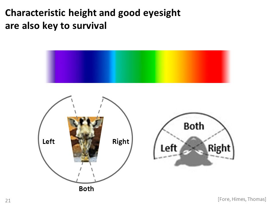 Characteristic height and good eyesight are also key to survival 21 [Fore, Himes, Thomas] RightLeft Both