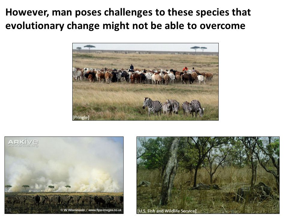However, man poses challenges to these species that evolutionary change might not be able to overcome 34 [Pringle] [U.S.