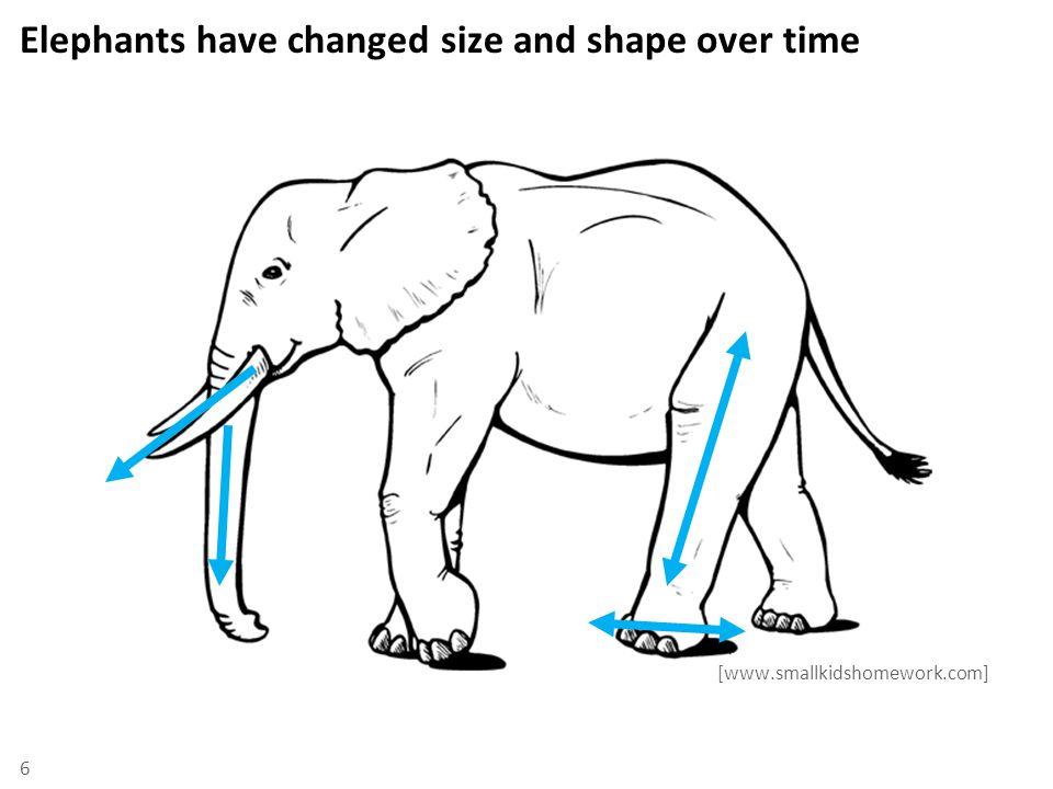 Using infrasonic sounds, elephants can communicate up to several kilometers apart infrasonic 7 Human hearing range [www.birds.cornell.edu]