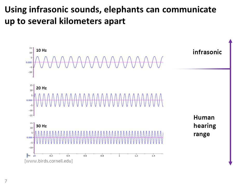 Infrasonic communication is made possible by the elephant's unique hyoid and trunk time 8 [www.sciencdirect.com] [www.birds.cornell.edu]