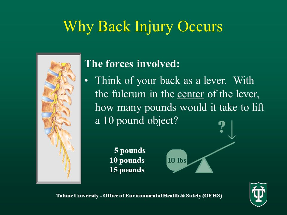 The forces involved: Think of your back as a lever.