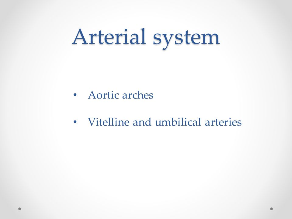 Arterial system Aortic arches Vitelline and umbilical arteries