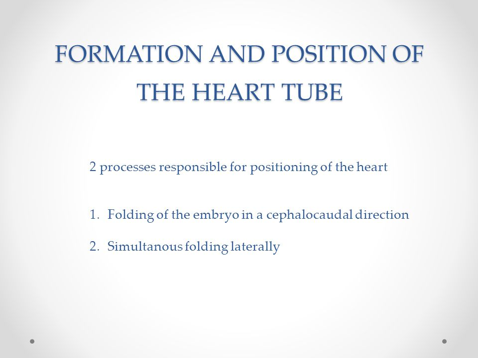 FORMATION AND POSITION OF THE HEART TUBE 2 processes responsible for positioning of the heart 1.Folding of the embryo in a cephalocaudal direction 2.S