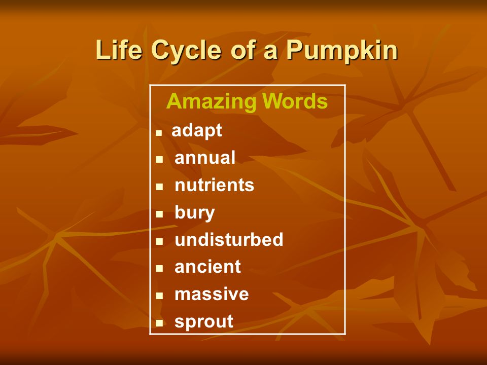 Life Cycle of a Pumpkin Amazing Words adapt annual nutrients bury undisturbed ancient massive sprout