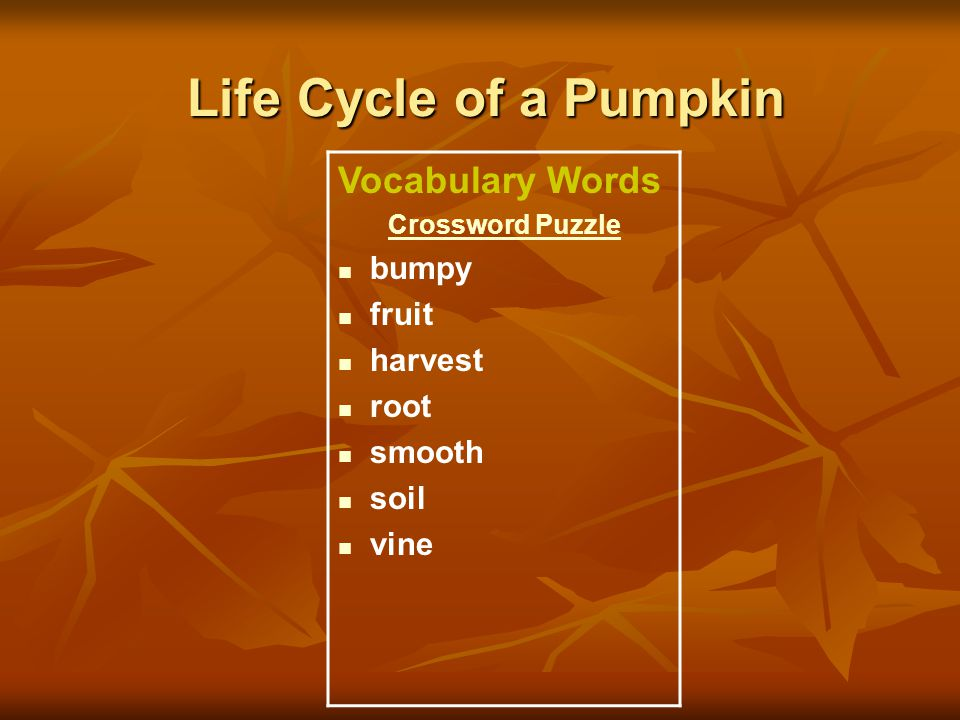 Life Cycle of a Pumpkin Vocabulary Words Crossword Puzzle bumpy fruit harvest root smooth soil vine