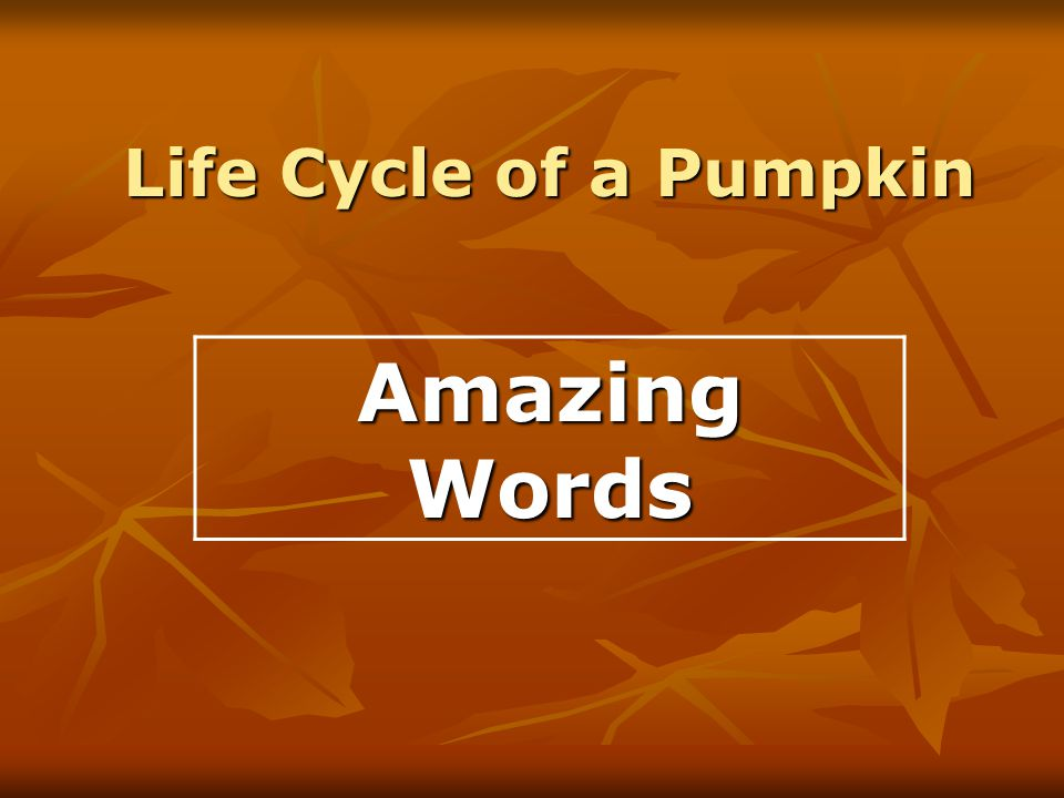 Life Cycle of a Pumpkin Amazing Words