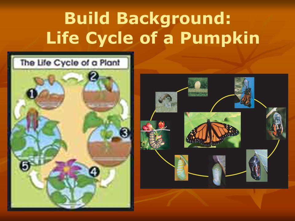 Build Background: Life Cycle of a Pumpkin